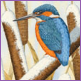 Midwinter Jewel - kingfisher//Limited edition print