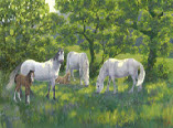 In The Shade - Welsh Mountain Ponies