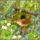 Lining The Nest - Wren/Limited edition print