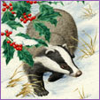 Badger in snow