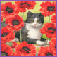 Black & Red - Cat in Poppies
